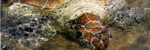 Gallery TURTLE CONSERVATION AND EDUCATION CENTER